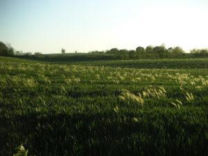 Feld Richtung Lutzhöft