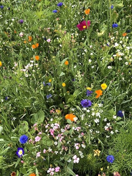 Ausschnitt der Blumenwiese von Marion Albrecht und Frank Hansen aus Bönstrup